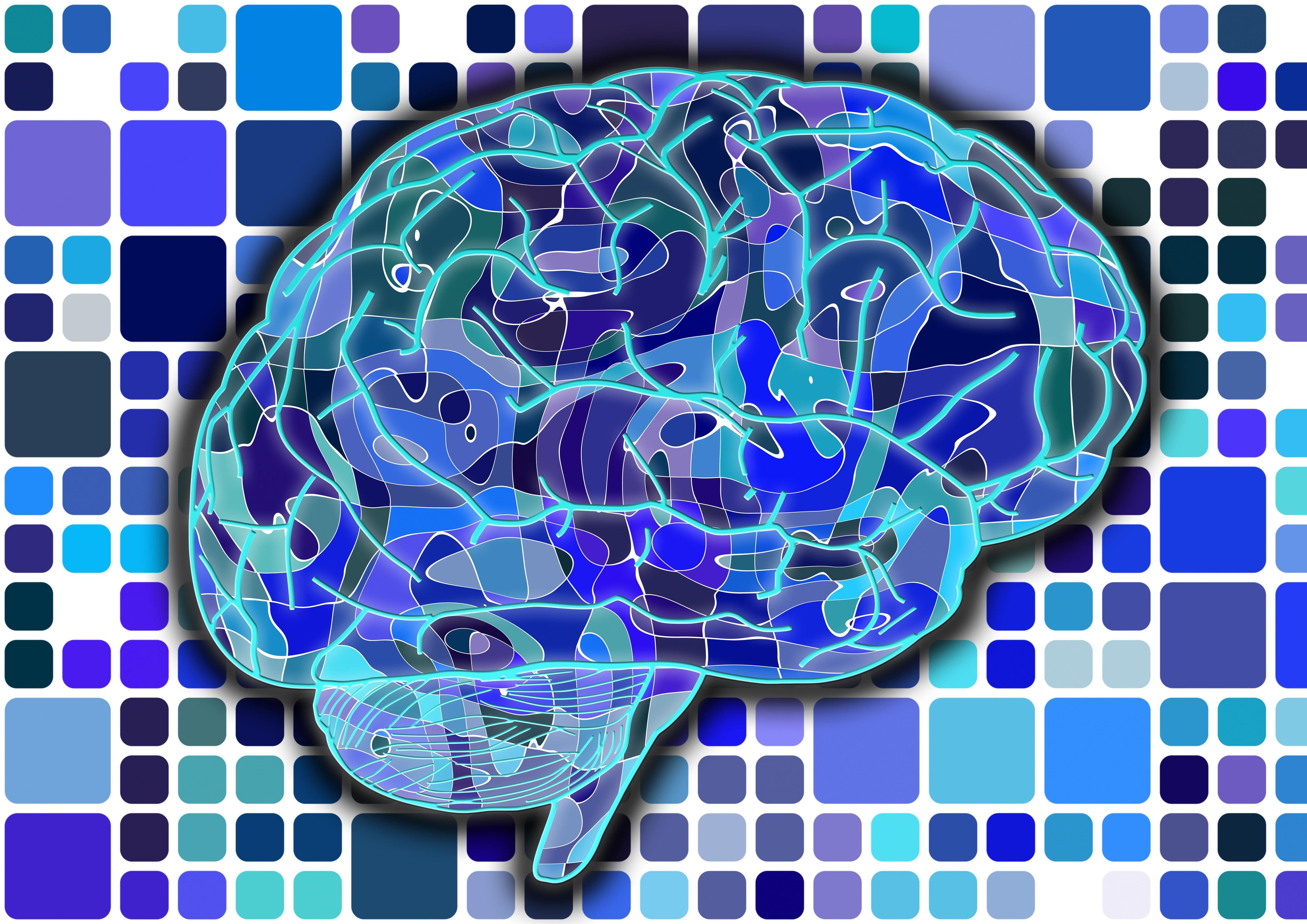 brain-951845